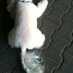 Dog Grooming in Poznan (salon kosmetyczny dla psow)