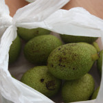Green Walnuts