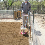 Growing veggies in the Sonoran desert – preparing the soil
